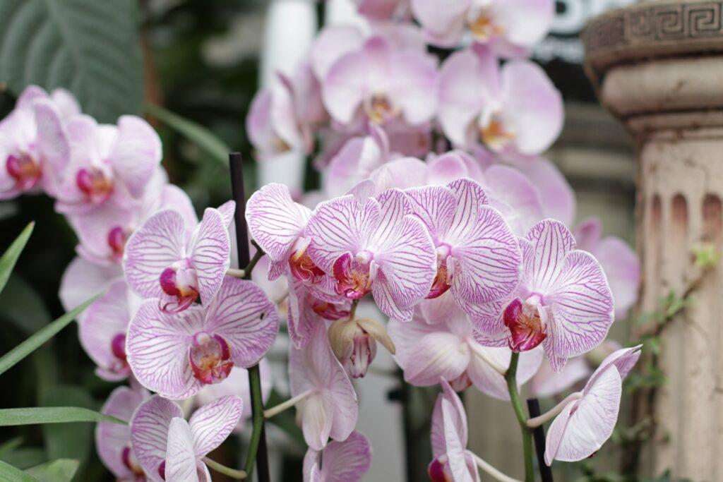 Фото прекрасных орхидей из тверского Ботанического сада появились в сети