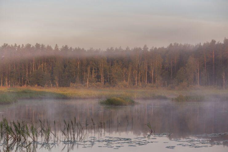 Тверской фотограф запечатлела туманные красоты родного края