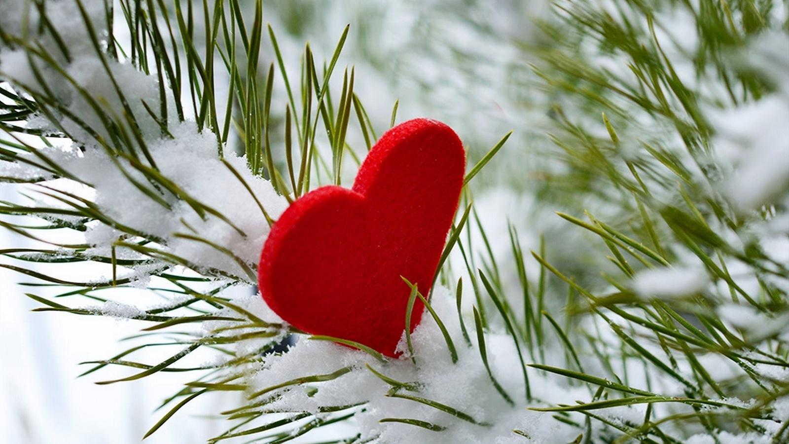 День всех влюбленных в Тверской области будет снежным и морозным