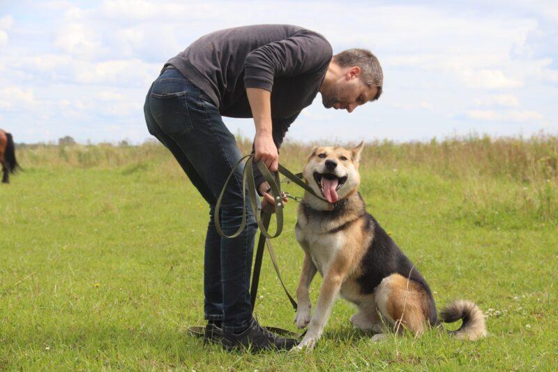 Женщина в Тверской области хотела зарубить собаку