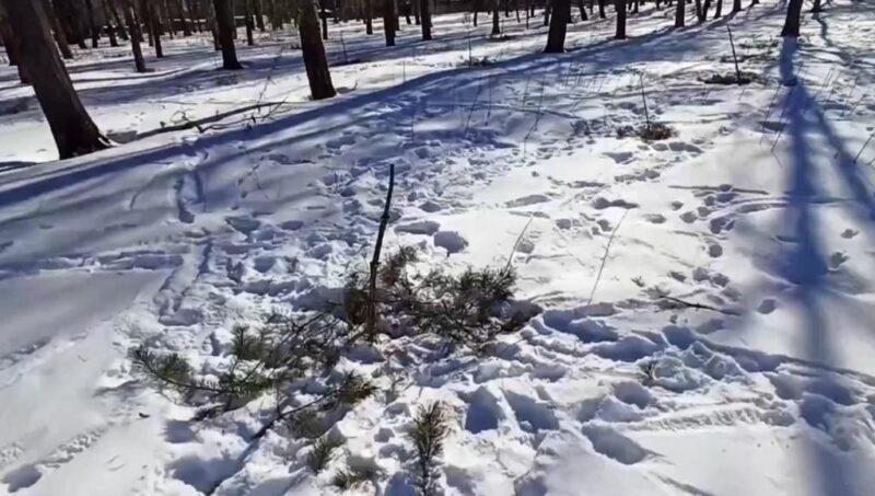 """Уничтоженный вандалами """"Сад Памяти"""" будет восстановлен"""