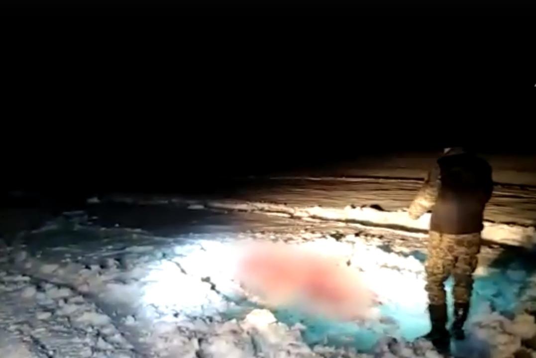 Игорь Руденя взял трагедию с беременной лосихой под личный контроль