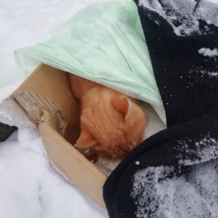 В Твери на людей, расстрелявших кота, завели уголовное дело