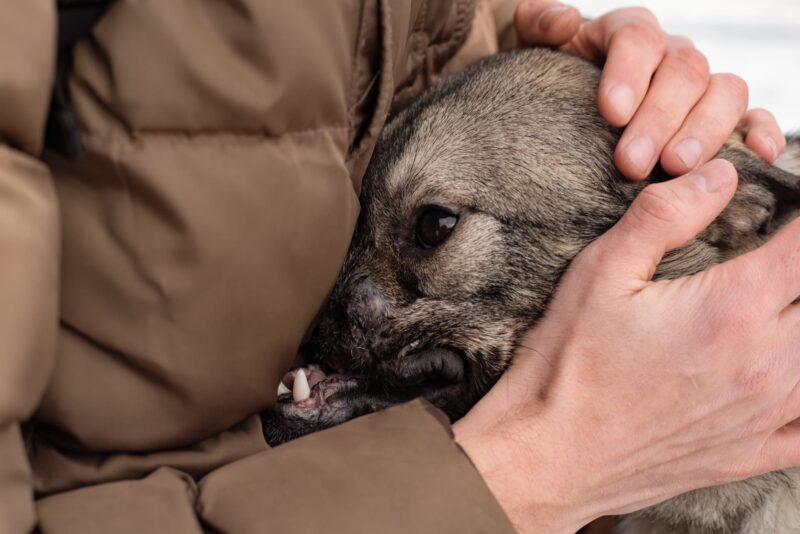 В Твери зоозащитники ищут дом для особенной собаки