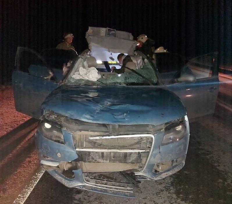 И снова лось: в Тверской области Ауди А-4 сбила четвероногого