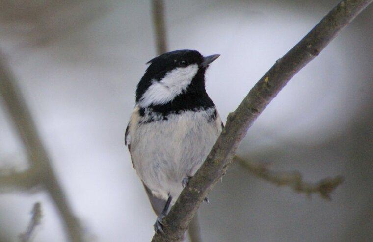 В Твери пройдет квиз к Международному дню птиц