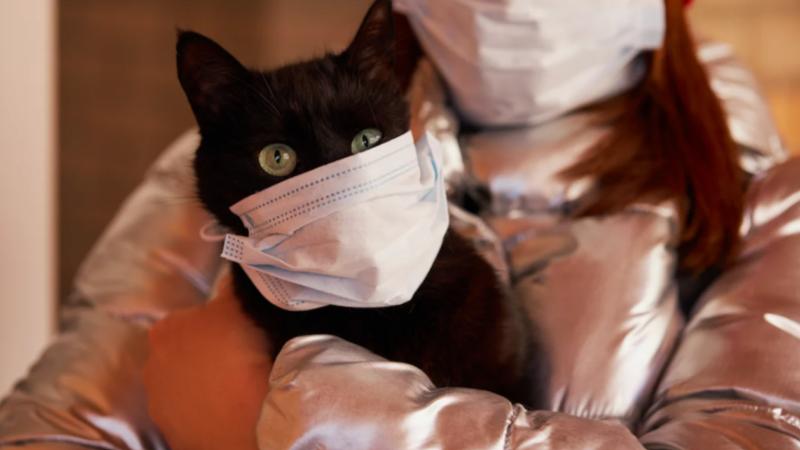 В Конаково и Конаковском районе бесплатно вакцинируют собак и кошек