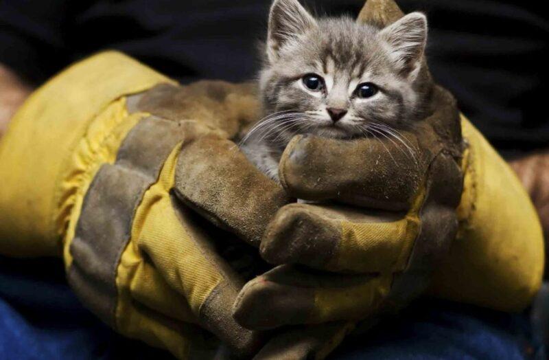 Котенка в Тверской области спасли из вентиляционного плена