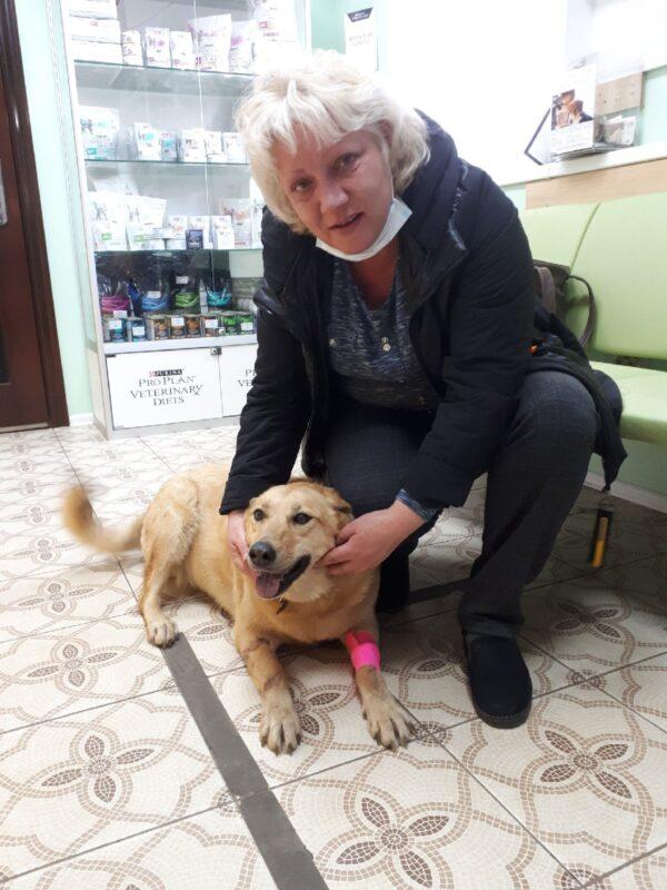 Ветеринары из Твери спасли отравленную собаку