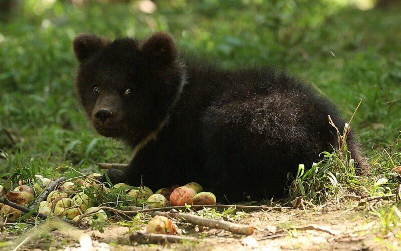 Центр спасения медвежат рассказал как дела у Пужи