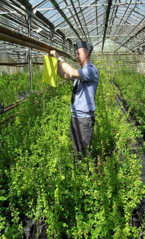 В Тверской области проходит мониторинг карантинных насекомых-вредителей