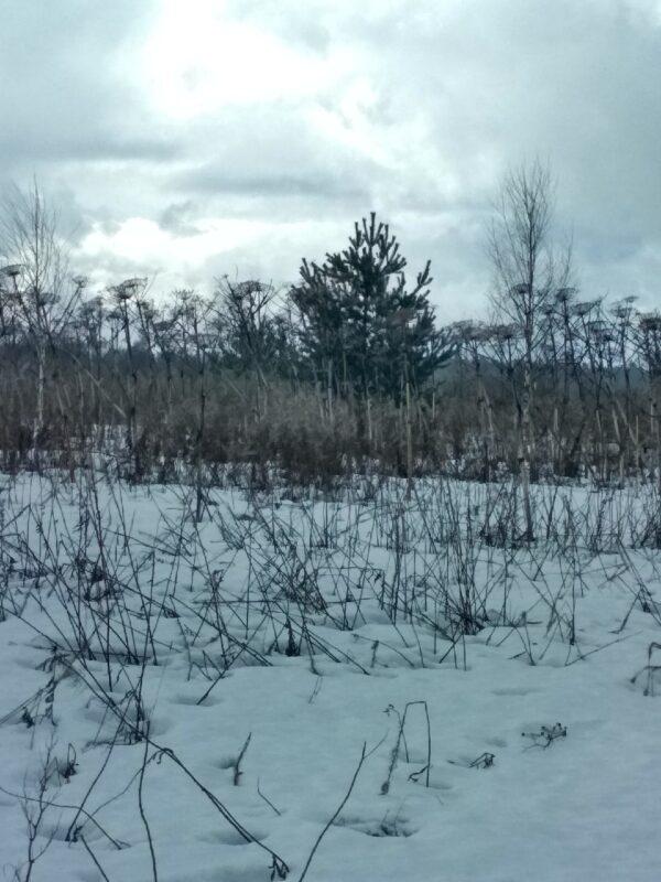 Землевладелец из Максатихи запустил 58 гектаров земли