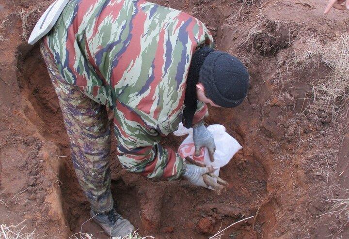 В Андреапольском районе поисковики подняли останки безымянного солдата 133 стрелковой дивизии