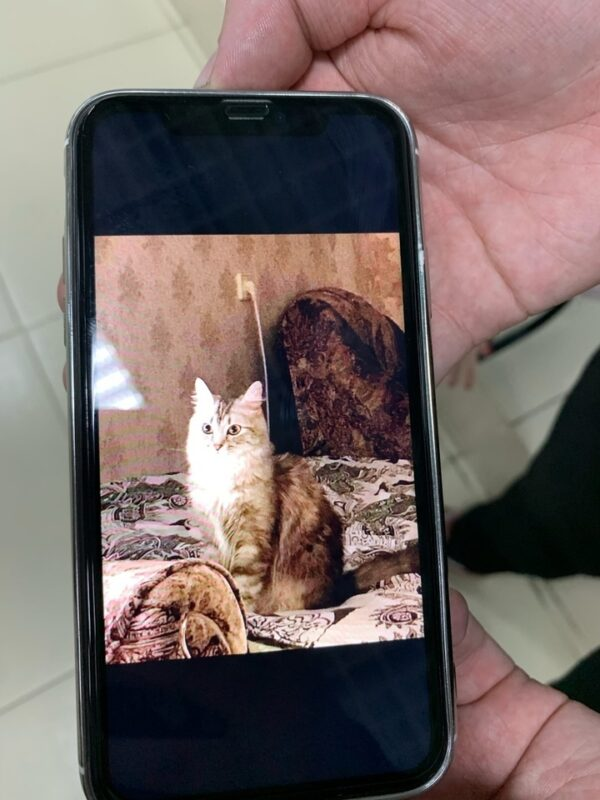 В Твери мошенники обманом заполучили кошек для выставки