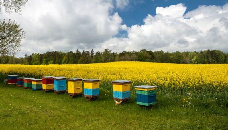 «Россельхозцентр» рассказал о обеспечении безопасности пасек при применении пестицидов