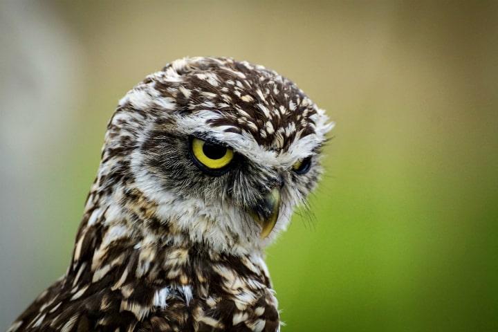 Библиотека Западнодвинья знакомит читателей с голосами птиц