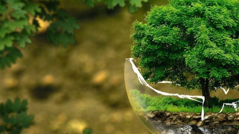 Жители Западной Двины могут принять участие в экологическом конкурсе