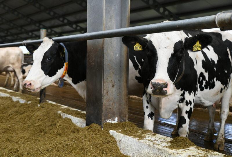 Молочное скотоводство Тверской области получит субсидии по повышенной ставке