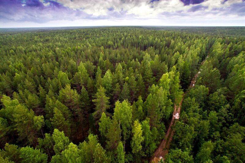 Лесной фонд Тверской области увеличится больше, чем на 2 тыс. га