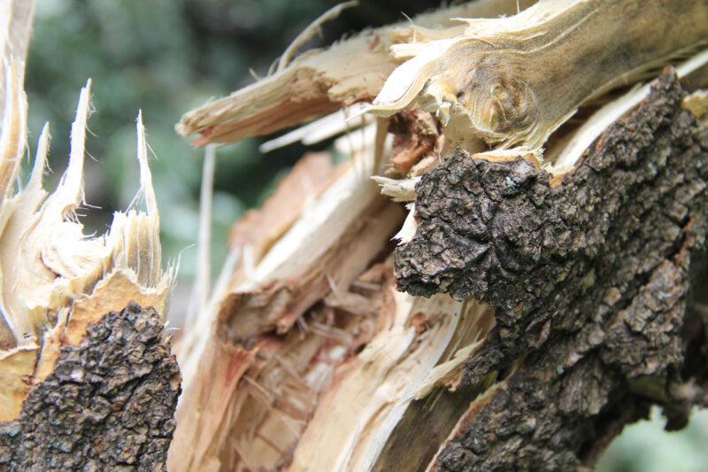 Квадроциклист погиб, протаранив дерево в Тверской области