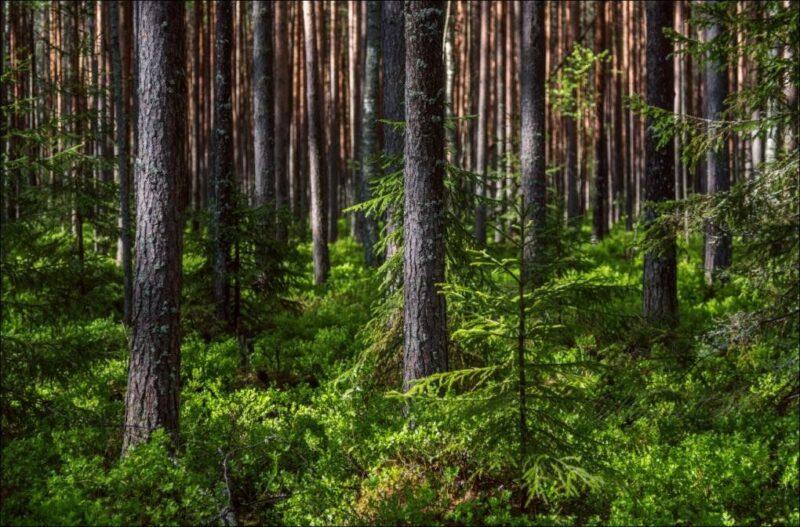 В Тверской области утвердили границы еще семи особо охраняемых природных территорий