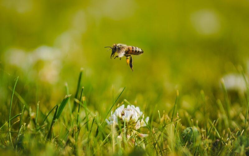 «Россельхозцентр» рассказал об обеспечении безопасности пасек при применении пестицидов