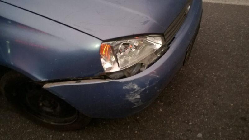 В Тверской области водитель отвлекся на лося и сбил пешехода