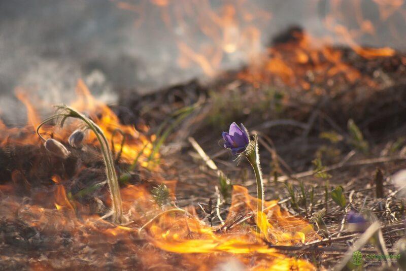 Не пали, да при деньгах будешь: жителей Тверской области призывают не жечь сухую траву и озвучивают штрафы