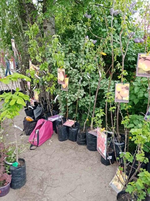 По всей Тверской области продают саженцы без документов