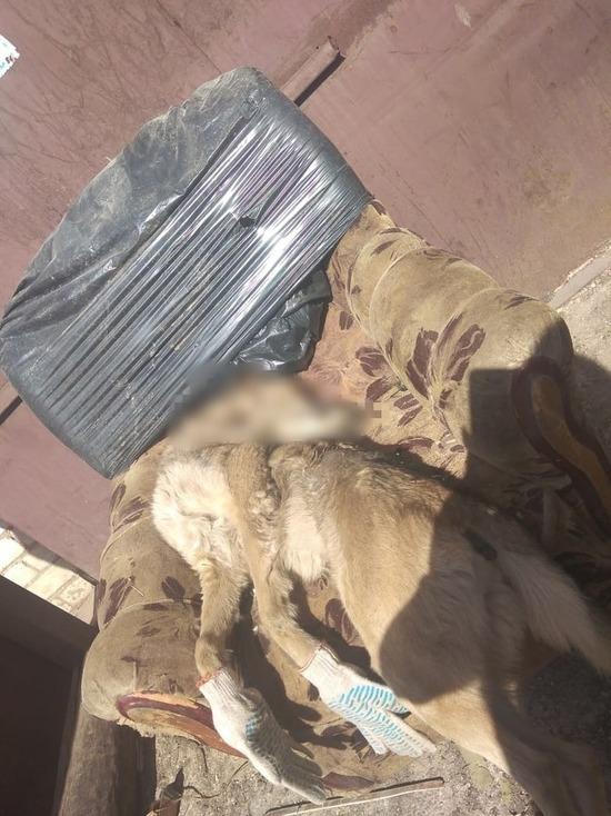 Мучительно и хладнокровно: неизвестные в Тверской области зверски убили собаку