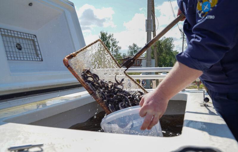 В Тверской области в водоемы выпустят в два раза больше рыб