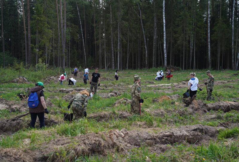 В Региональный день посадки леса в деревне Савино высадили 3 тысячи сеянцев ели