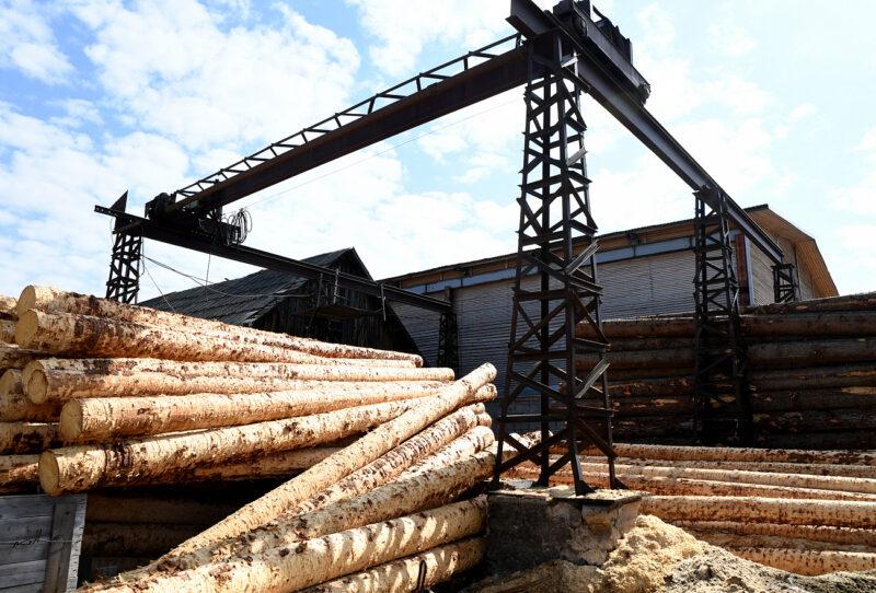 Новые меры поддержки леспрома в Тверской области профинансируют 189 миллионов рублей
