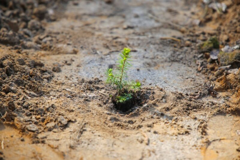 Более 2 тысяч елей высадили в Калининском районе в Региональный день посадки леса