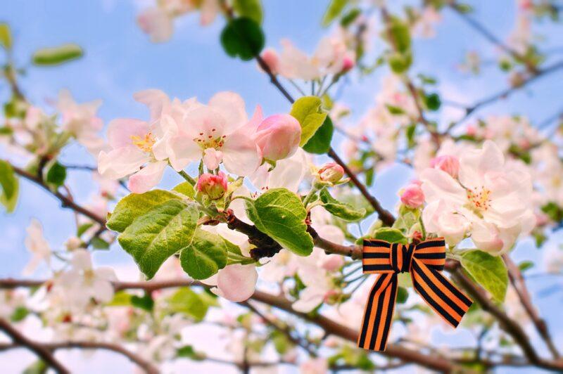 Весна победы наступает в Нелидовском городском округе