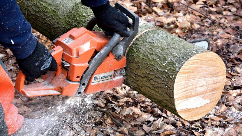 В Тверской области незаконно спилили 23 дерева