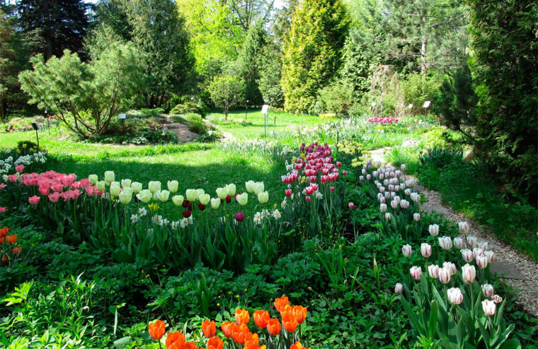Музыка сада от филармонии прозвучит в Ботаническом саду Твери