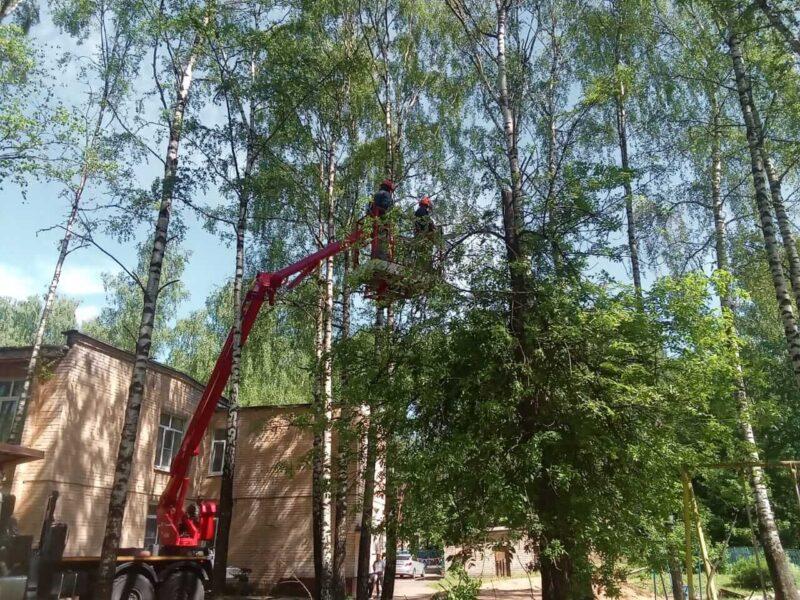 Сотрудники Тверьэнерго в преддверии Дня защиты детей помогли опилить деревья в детском противотуберкулезном санатории