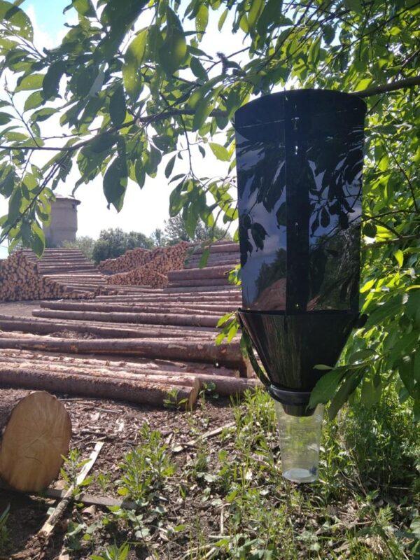 В Тверской области проходит феромонный мониторинг
