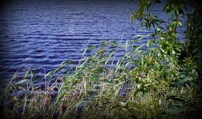 В реке Тверской области утонул пенсионер