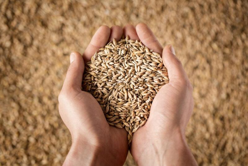 Россельхознадзор подвел итоги досмотра импортных и экспортных грузов с продукцией растительного происхождения