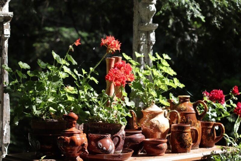 Цветочная выставка с воспоминаниями о детстве открылась в ботаническом саду ТвГУ