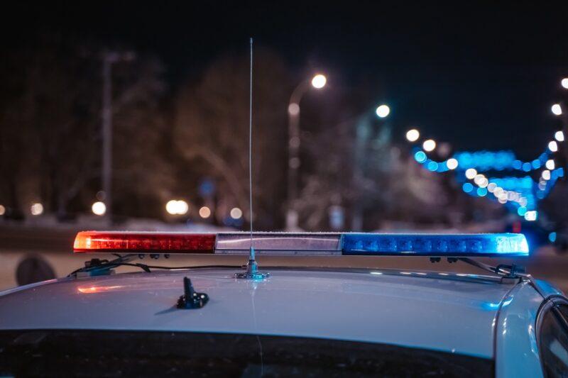 В Тверской области автомобиль столкнулся с лосем