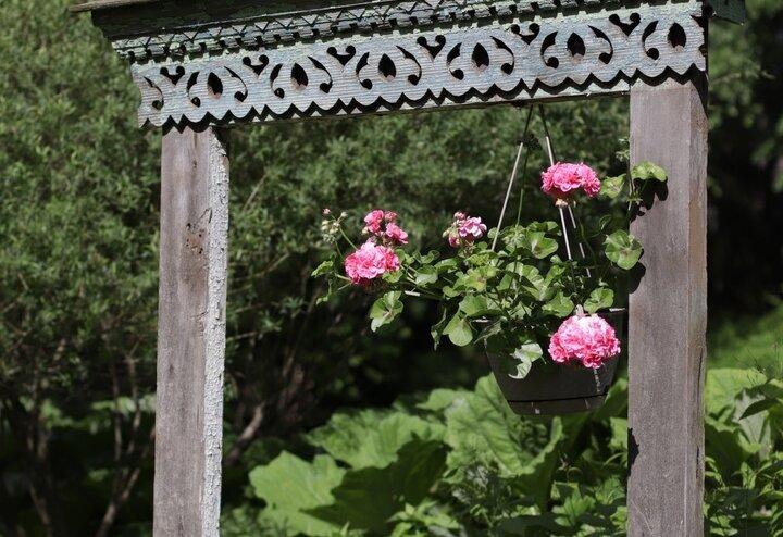 В Тверском ботаническом саду наступило волшебное время