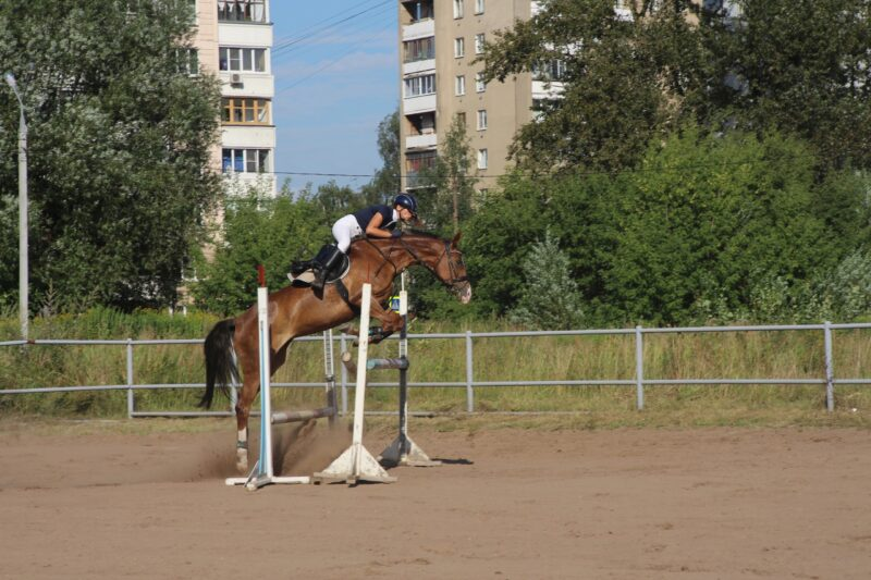 Конец июня порадует конников-спортсменов Чемпионатом Тверской области по конкуру