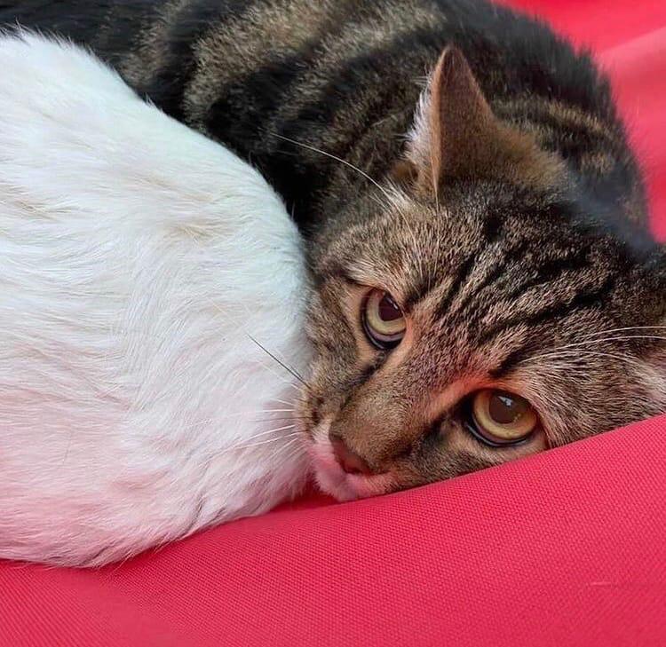 Девушка наткнулась на котов в мешке в одном из лесов в Твери
