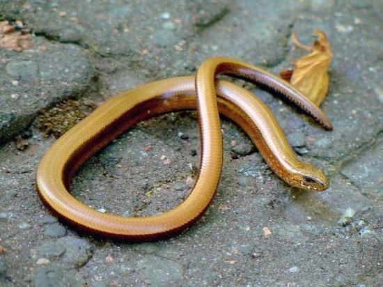 Жителей Оленино предупреждают о змеях на детской площадке