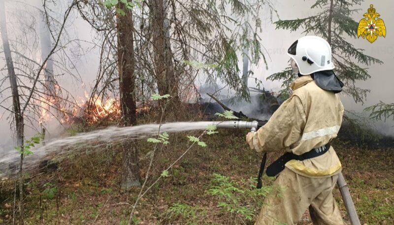 В Тверской области введён запрет на посещение лесов