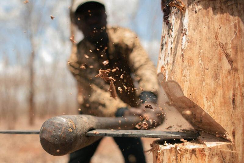 В Бологое за незаконную вырубку леса осудили трёх человек