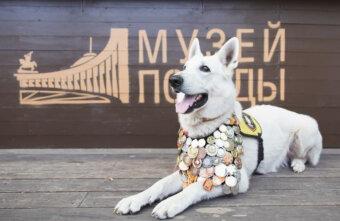 Жителей Тверской области приглашают поучаствовать в конкурсе, приуроченному ко Дню фронтовой собаки
